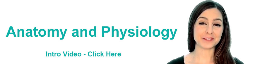 Anatomy and Physiology Online Course ITEC - Gateway Workshops ...